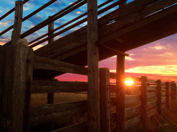 Photograph - Cattle Pens by Rod Seel