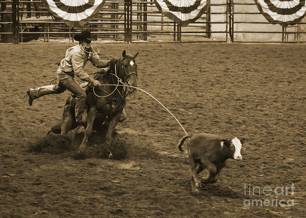 Crazy Horse Photograph - Cattle Roping In Colorado by Janice Pariza