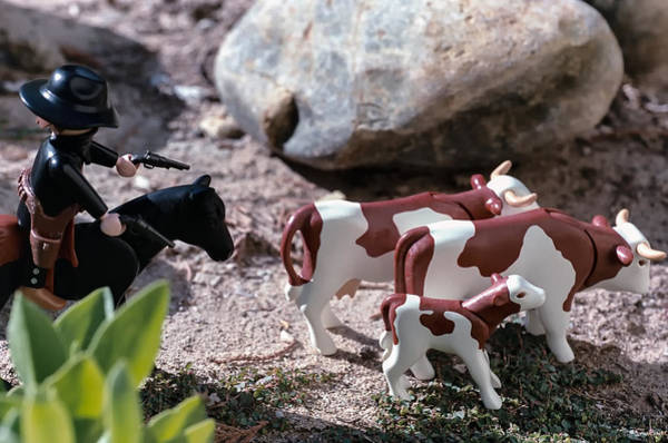 Wall Art - Photograph - Cattle Rustler by Caitlyn  Grasso