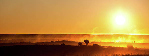 Cattle Silhouette Panorama Art Print by Imaginegolf