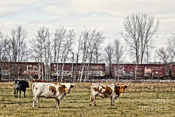 Photograph - Cattle Train by Ms Judi