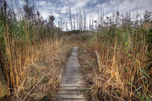 Photograph - Cattus Island Boardwalk by Dawn J Benko