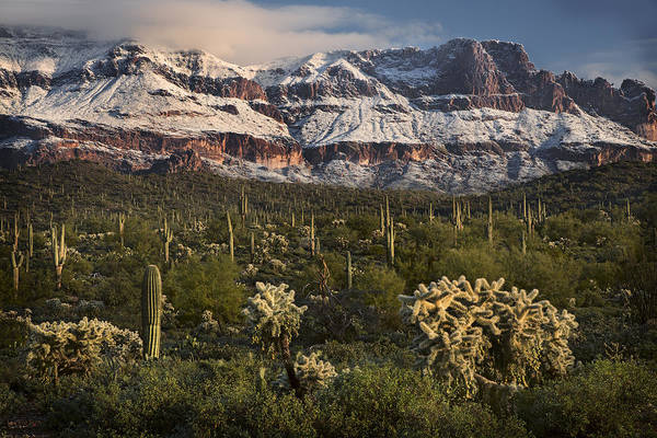 Photograph - Catus Snowy Mountains by Dave Dilli