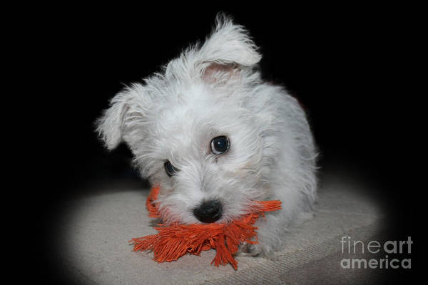 Naughty Dog Wall Art - Photograph - Caught In The Act by Terri Waters
