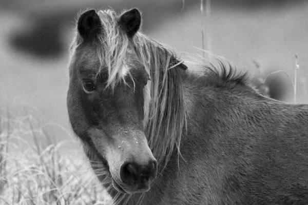 Ponies Photograph - Caught My Eye by Betsy Knapp