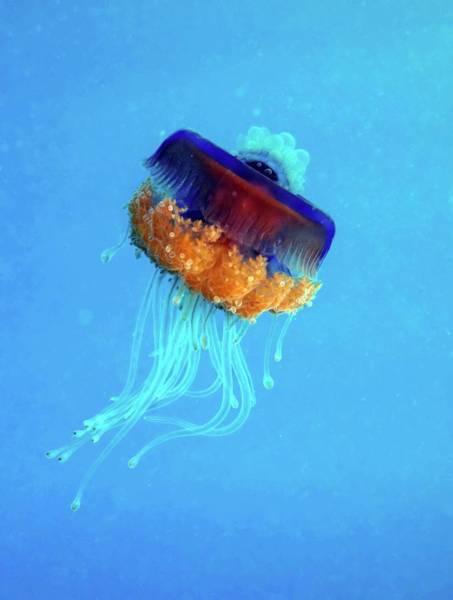 Cnidaria Photograph - Cauliflower Jellyfish by Louise Murray