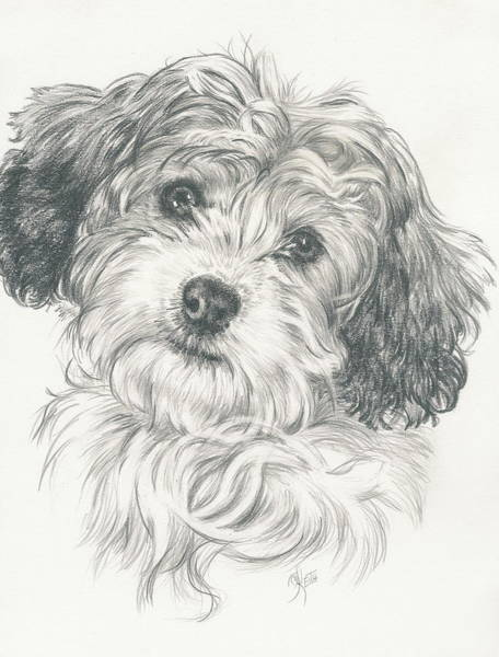 Mutt Drawing - Cava-chon Twin by Barbara Keith