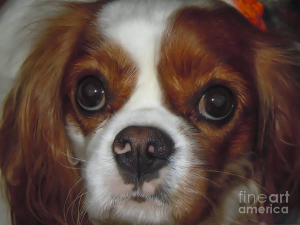 Photograph - Cavalier Closeup by Dale Powell