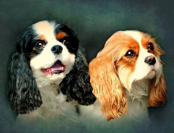 Sweet Puppy Photograph - Cavalier King Charles by Diana Angstadt
