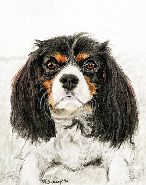Art Print featuring the pastel Cavalier King Charles Spaniel Painting by Kate Sumners