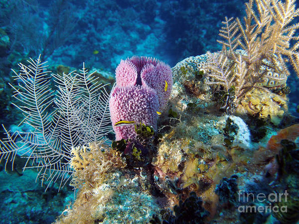 Island Life Wall Art - Photograph - Cayman Reef by Carey Chen