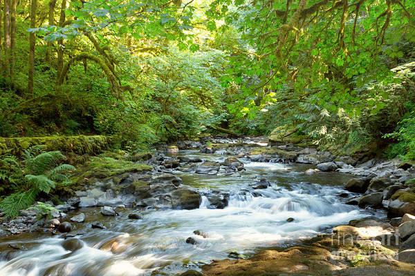 Photograph - Cedar Creek by Beve Brown-Clark Photography