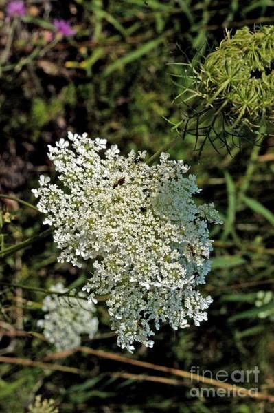 Photograph - Cedar Flower One by Joseph Yarbrough