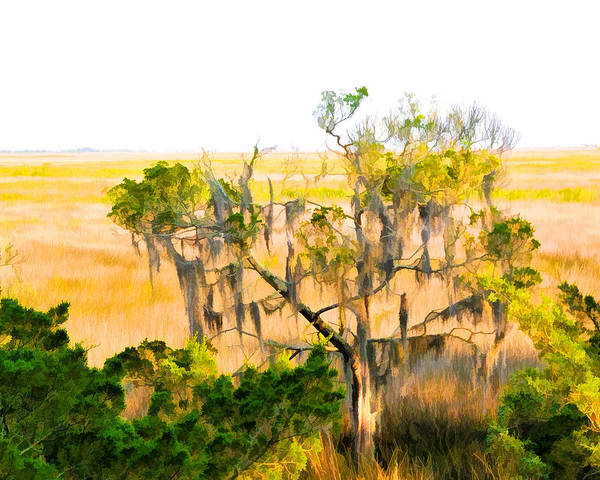 Photograph - Cedar In The Marsh by Ginger Wakem