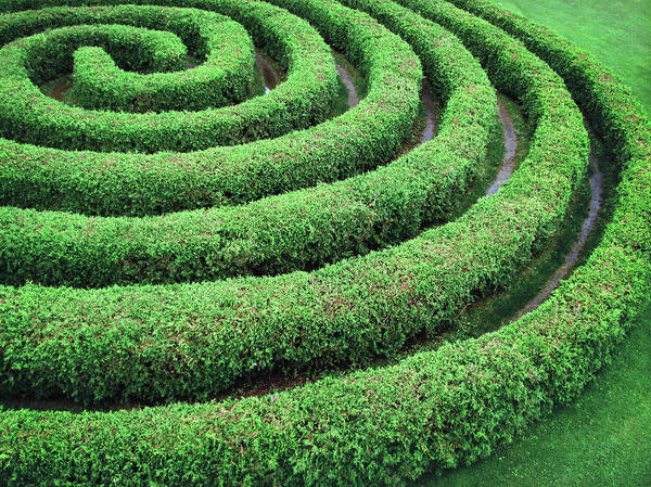 Green Color Photograph - Cedar Maze by Francois Dion