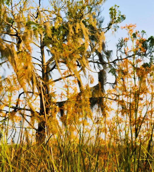 Photograph - Cedar  Moss And Marsh by Ginger Wakem