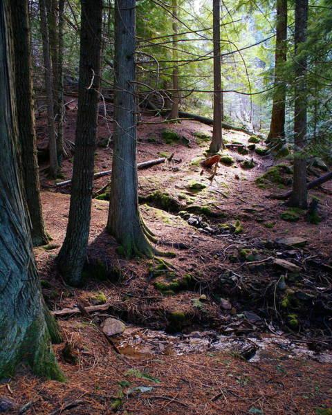 Photograph - Cedar Peace by Ben Upham III