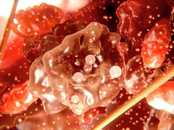 Wall Art - Photograph - Cell Organelles, Artwork by Juan Gaertner