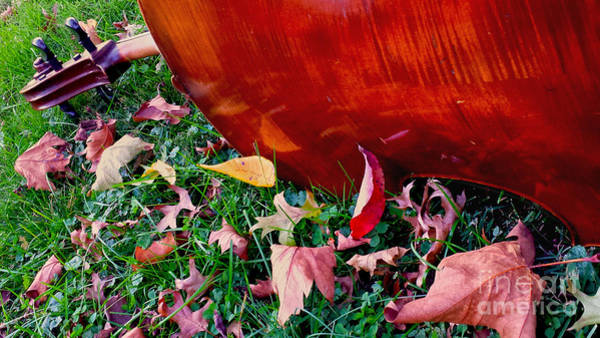 Wall Art - Photograph - Cello In Autumn by Anna Lisa Yoder