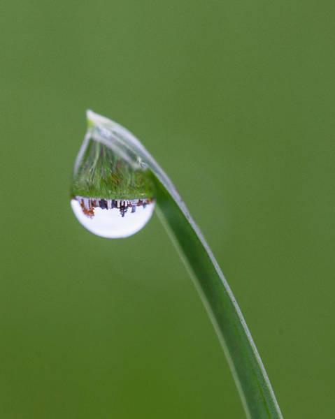 Vermont Photograph - Cemetery Dew by Barbara Friedman
