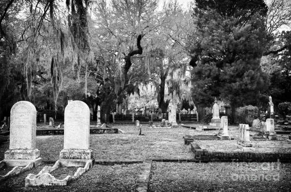 Photograph - Cemetery Guests by John Rizzuto