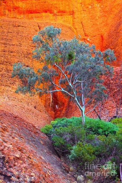 Central Australia Photograph - Central Australia by Bill  Robinson