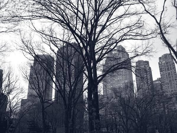 Photograph - Central Park by Carlos Diaz