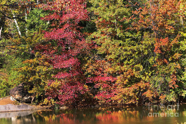 Photograph - Central Park Fall Colors by Steven Spak