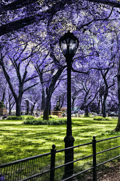 Photograph - Central Park In The Spring by Evie Carrier