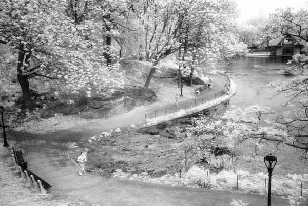 Photograph - Central Park North Infrared by Dave Beckerman