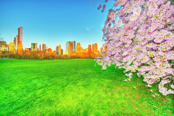 Wall Art - Photograph - Central Park  Sheep Meadow At Ssunrise by Mitchell Funk