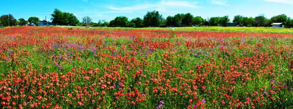 Photograph - Central Texas Wildflower Wonderland Panorama by Lynn Bauer