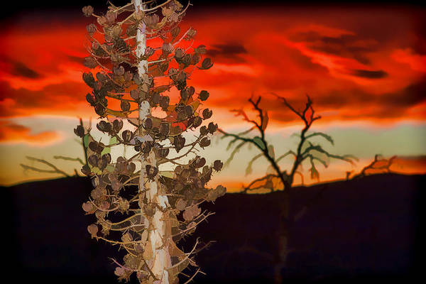 Photograph - Century Soldier Sunset by Scott Campbell