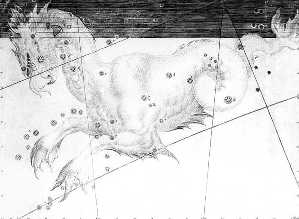 First Star Photograph - Cetus Constellation by Royal Astronomical Society/science Photo Library