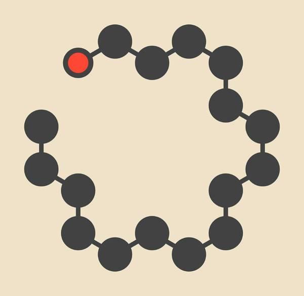 Molecular Wall Art - Photograph - Cetyl Alcohol Molecule by Molekuul/science Photo Library