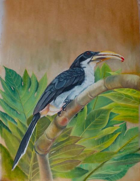 Hornbill Painting - Ceylon Grey Hornbill by Nirosh Perera