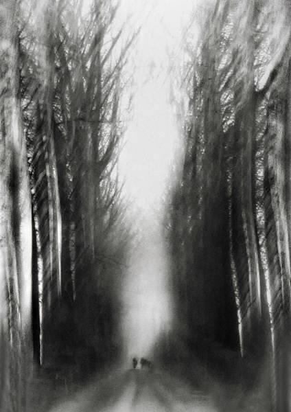 Belgium Wall Art - Photograph - Cezanne's Walk by Yvette Depaepe