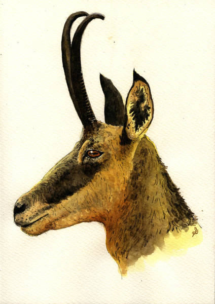 Heads Painting - Chamois Deer by Juan  Bosco
