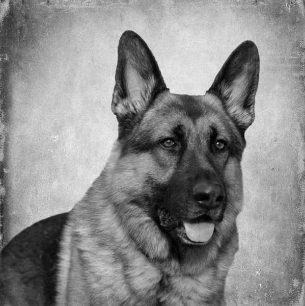 Photograph - Chance - Black And White by Sandy Keeton