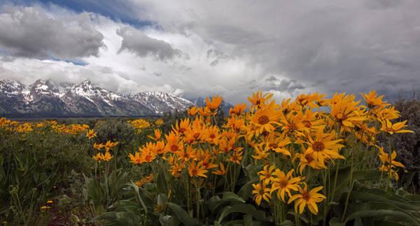 Arrowleaf Balsamroot Photograph - Change Of Seasons by Sandy Sisti