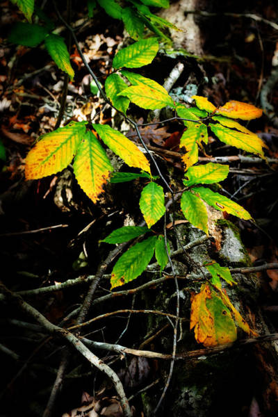 Photograph - Changing Leaves by George Taylor