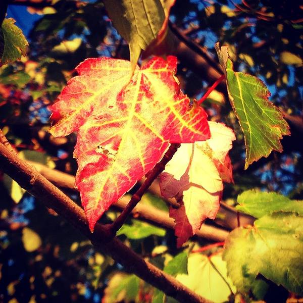 Photograph - Changing Season by Candice Trimble