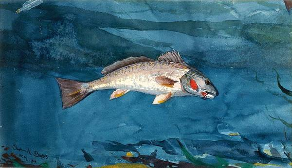 Wall Art - Painting - Channel Bass by Winslow Homer