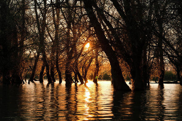 Alder Photograph - Channels During Sunrise In The Danube by Martin Zwick