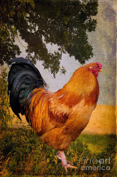 Rooster Photograph - Chanticleer In Blue by Lois Bryan