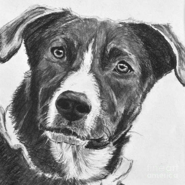Art Print featuring the drawing Charcoal Dog Shepherd by Kate Sumners