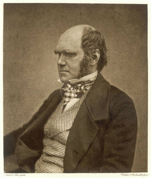 Wall Art - Photograph - Charles Darwin (1809-1882) Aged by Mary Evans Picture Library