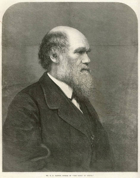 Wall Art - Drawing - Charles Darwin (1809-1882) English by  Illustrated London News Ltd/Mar