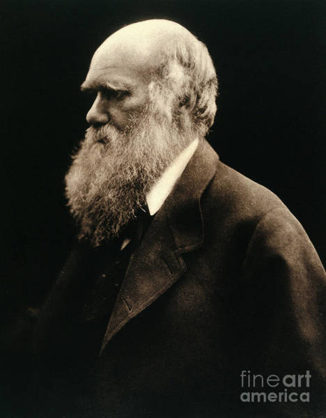 Photograph - Charles Darwin By Julia Margaret by Wellcome Images