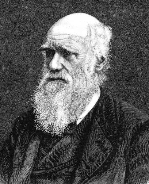 1800s Wall Art - Photograph - Charles Darwin by Collection Abecasis